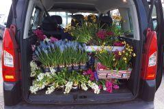 auto-vol-hyacinthen