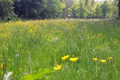 Bloemrijk-grasland-stiltegebied